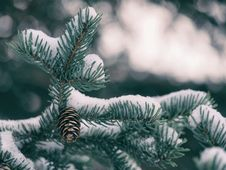 Free Close-up Of Pine Tree In Forest During Winter Stock Photos - 89807273