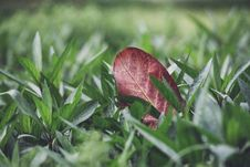 Free Fall Leaf In Green Grass Stock Photos - 89807563