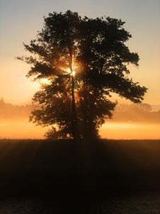 Free Green Tree Over The Sunset Royalty Free Stock Image - 89808136
