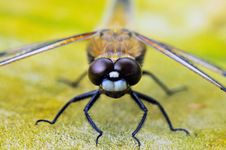 Free Insect, Invertebrate, Macro Photography, Fauna Royalty Free Stock Image - 89871806