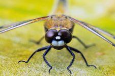 Free Insect, Invertebrate, Macro Photography, Fauna Royalty Free Stock Image - 89871806
