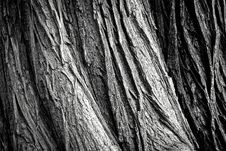 Free Black, Black And White, Monochrome Photography, Tree Royalty Free Stock Image - 89871896