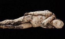 Free Organism, Darkness Stock Photo - 89871990