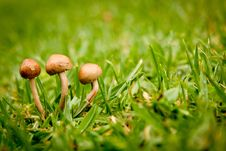 Free Close Up Photography Of Brown Mushroom On Green Grass During Daytime Royalty Free Stock Image - 89889866