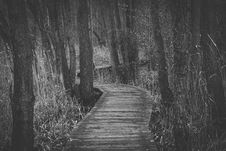 Free Boardwalk Amidst Trees In Forest Stock Photography - 89890902