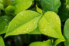 Free Leaf, Water, Moisture, Dew Royalty Free Stock Photo - 89893225