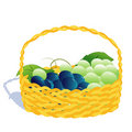 Free Basket With Grape Stock Photography - 8992582