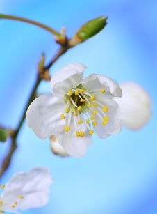 Free Spring Blossoms Stock Photography - 8991072