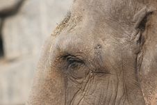 Free Elephant Eye Royalty Free Stock Photography - 8991607