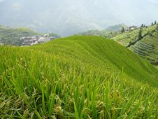 Free Longsheng Rice Terraces, China Royalty Free Stock Photography - 8993577