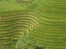 Free Longsheng Rice Terraces, China Stock Photo - 8993730
