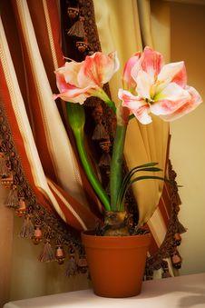 Free Indoor Flower Stock Photo - 8995870