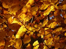 Free Yellow, Autumn, Leaf, Deciduous Stock Photo - 89902360