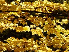 Free Yellow, Deciduous, Maidenhair Tree, Leaf Royalty Free Stock Photo - 89902475