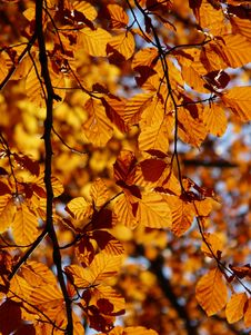 Free Branch, Autumn, Deciduous, Yellow Stock Photo - 89902610