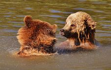 Free Brown Bear, Grizzly Bear, Mammal, Dog Royalty Free Stock Photography - 89903947