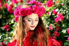 Free Flower, Rose Family, Beauty, Rose Royalty Free Stock Photography - 89904277