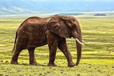 Free Elephant, Elephants And Mammoths, Terrestrial Animal, Grassland Stock Photo - 89904580
