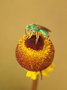 Free Insect, Macro Photography, Close Up, Invertebrate Stock Image - 89904851