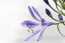 Free Flower, Plant, Purple, Violet Stock Photography - 89905092