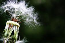 Free Dandelion, Flower, Flora, Plant Stock Images - 89905094