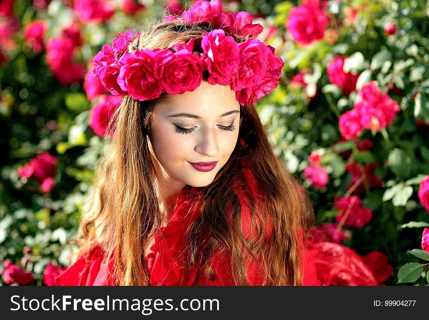 Flower, Rose Family, Beauty, Rose
