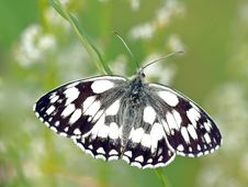 Free Butterfly, Moths And Butterflies, Insect, Invertebrate Royalty Free Stock Photography - 89913377