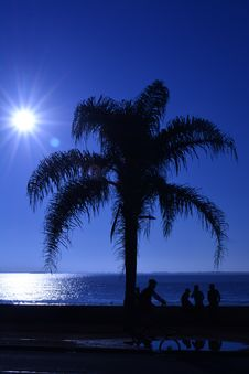 Free Sky, Palm Tree, Sea, Arecales Royalty Free Stock Photos - 89913598