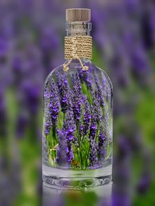 Free Glass Bottle, Bottle, Lavender, Purple Royalty Free Stock Photos - 89913638