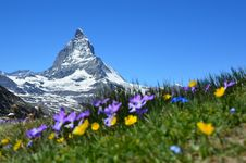 Free Flower, Mountainous Landforms, Wildflower, Mountain Stock Images - 89914174