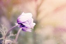 Free Flower, Purple, Violet, Flora Royalty Free Stock Image - 89914576