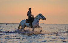 Free Horse, Horse Like Mammal, Sea, Stallion Stock Images - 89914764