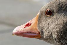 Free Beak, Bird, Fauna, Water Bird Royalty Free Stock Images - 89914859
