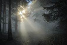 Free Fog, Atmosphere, Mist, Forest Royalty Free Stock Image - 89914866
