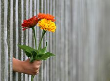 Free Flower, Plant, Flowering Plant, Flowerpot Stock Photos - 89914913