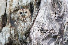 Free Owl, Tree, Fauna, Bird Of Prey Stock Photography - 89915662