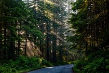 Free Road, Nature, Forest, Ecosystem Royalty Free Stock Photos - 89916498