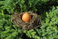 Free Nest, Bird Nest, Egg, Tree Royalty Free Stock Photos - 89916558