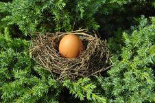 Free Nest, Bird Nest, Egg, Tree Royalty Free Stock Photos - 89916558