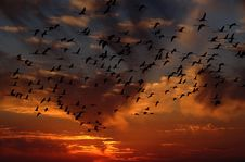 Free Sky, Afterglow, Flock, Bird Migration Royalty Free Stock Images - 89917119