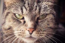 Free Annoyed Cat Stock Images - 89963164