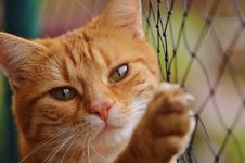 Free Cat, Whiskers, Face, Fauna Stock Photos - 89964333