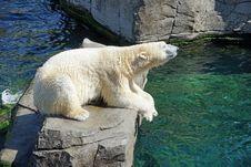 Free Polar Bear, Fauna, Bear, Zoo Stock Image - 89964591