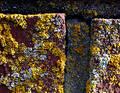 Free Closeup Of Bricks With Moss Stock Image - 95731
