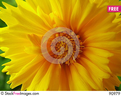 Free Bright Spring Royalty Free Stock Images - 90979