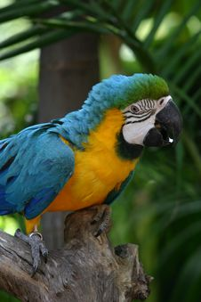 Free Macaw Stock Photography - 93672
