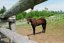 Free Horse And Fence Royalty Free Stock Image - 93846