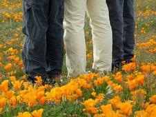 Free Outstanding In Poppy Field Stock Photos - 95493