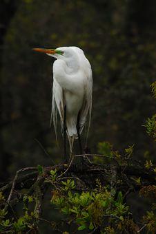 Free Stuck Up Bird Royalty Free Stock Photography - 97457