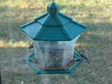 Free Bird Feeder Royalty Free Stock Photos - 97858